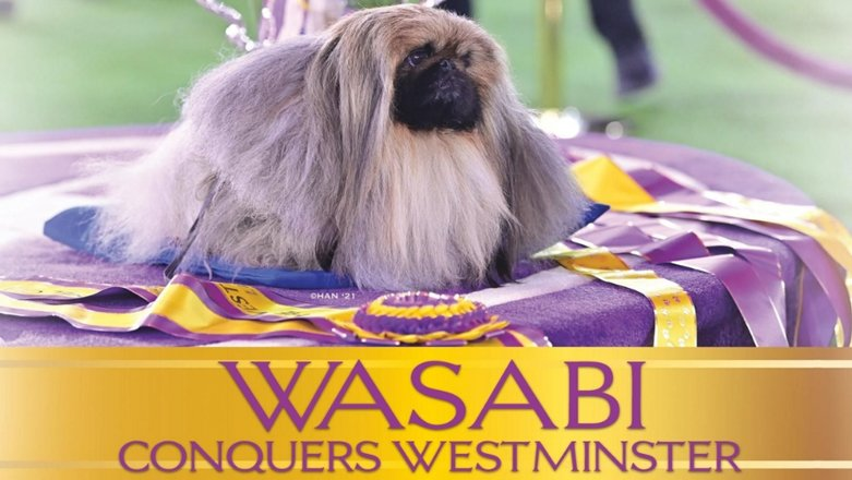Wasabi Conquers Westminster July 2021