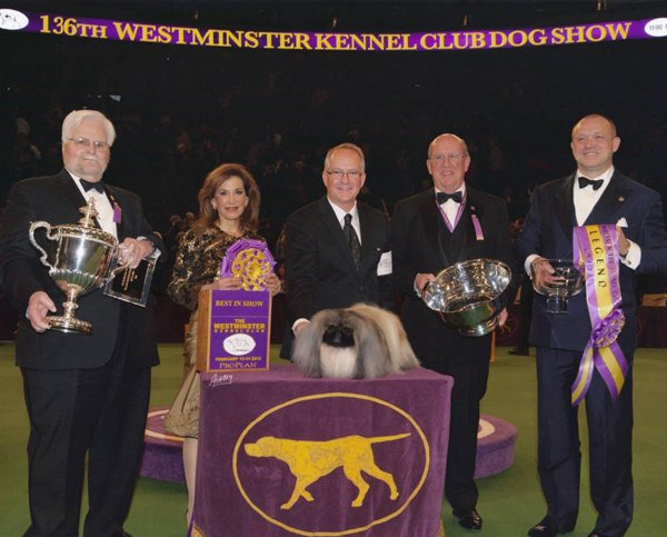 BIS at Westminster 2012 with the UK bred Pekingese Am Ch Palacegarden Malachy