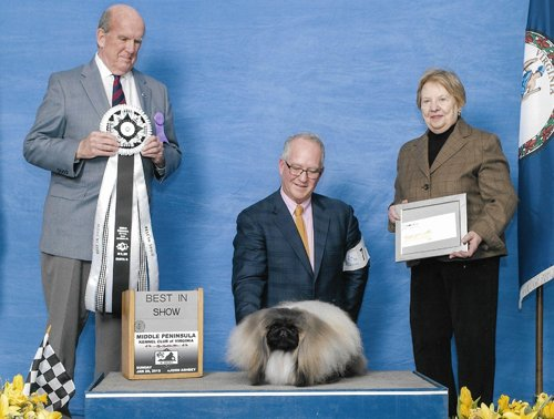 Ch Pequest Feel The Burn Best In Show Middle Peninsula KC of Virginia Jan 2018