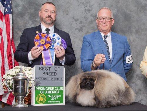 Ch Pequest Feel The Burn Group Best of Breed Pekingese Club of America 2017