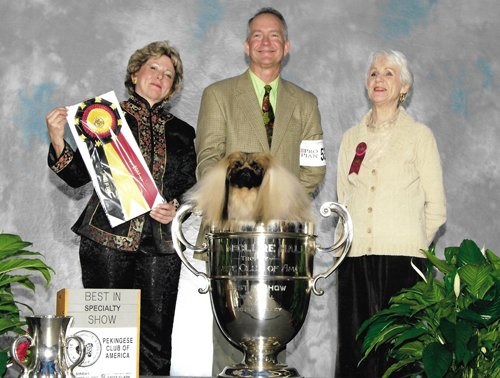 Ch Pequest Persuasive Best in Specialty Show Pekingese Club of America Jan 2007