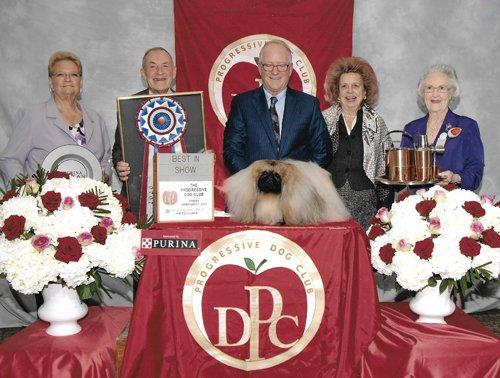 GCHS Pequest Wasabi BEST IN SHOW PROGRESSIVE DOG CLUB