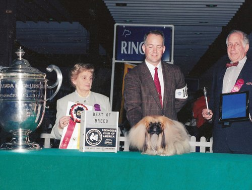 King's Court Social Lion Best of Breed PCA