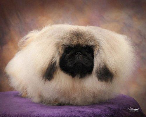 PalaceGarden Malachy as a puppy