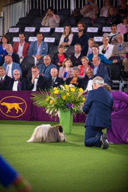 Judge Pat Trotter bending over to see Wasabi's expression at the 2021 Westminster Kennel Club Dog Show