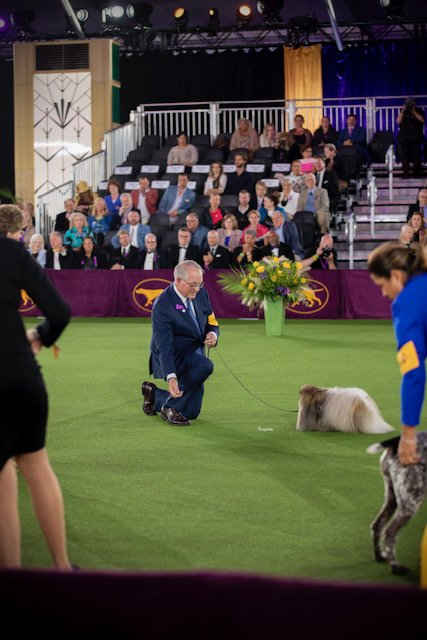 Wasabi and David in the middle of the ring at the 2021 Westminster Kennel Club Dog Show