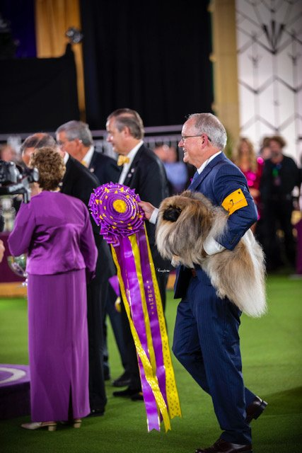 David holding Wasabi and the Best In Show ribbon.