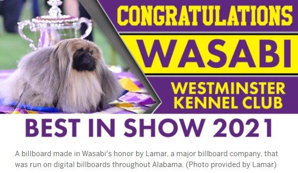Links to article: Wasabi the Pekingese has ties to Alabama