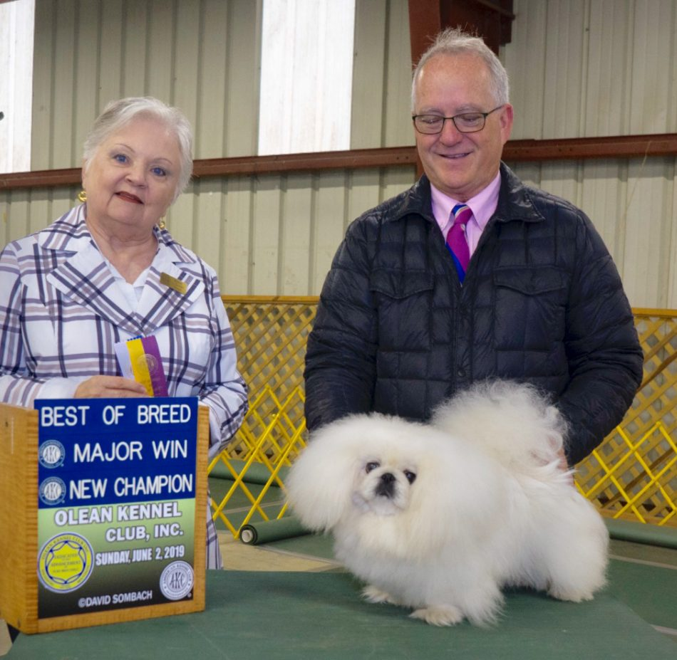 Ch Pequest Madam Butterfly Best of Breed