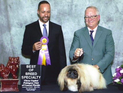 Ch Pequest Primrose Best of Breed Florida