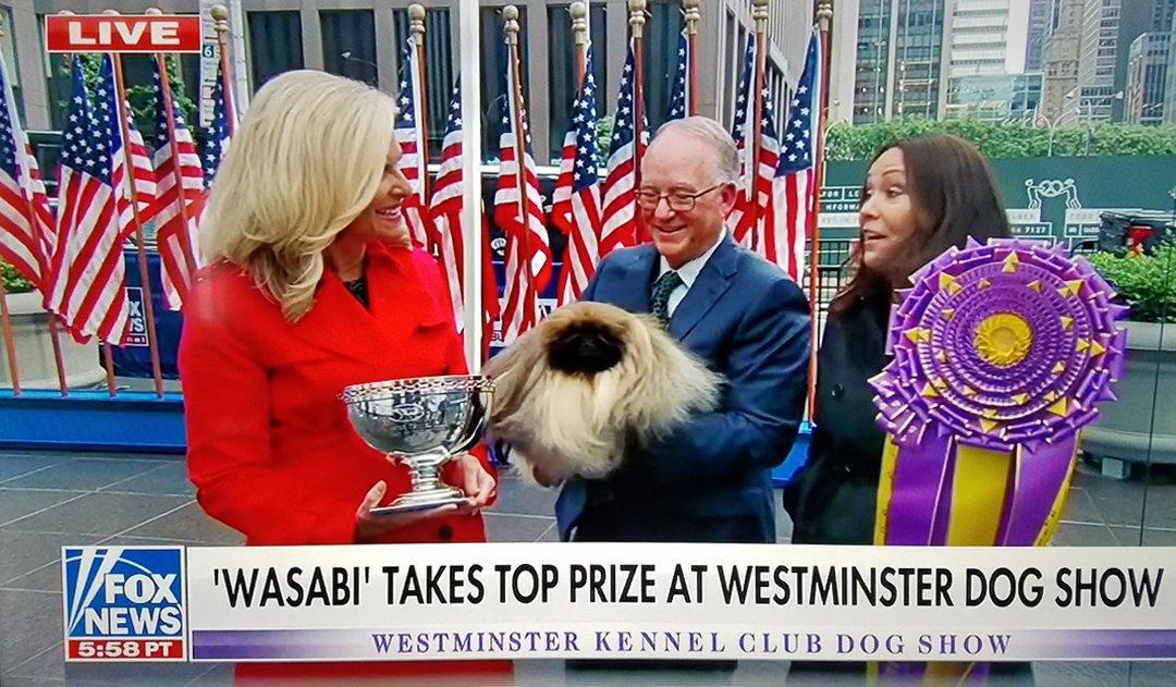 Fox News Wasabi 2