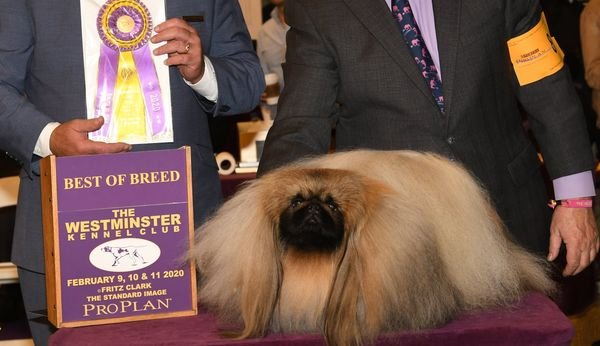 Wasabi - Best of Breed photo