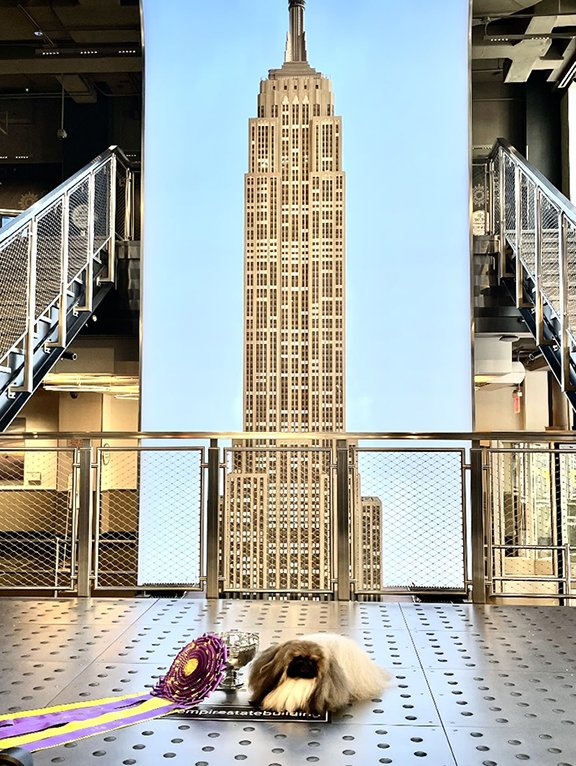 Wasabi at the Empire State Building
