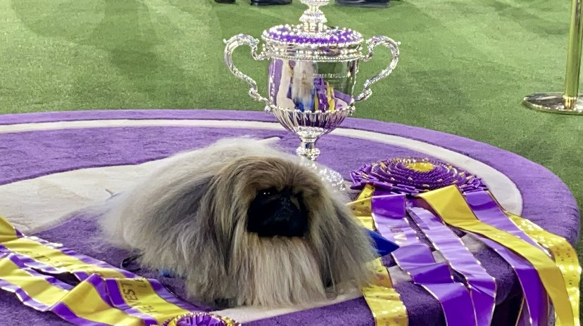 Wasabi surrounding by his Best In Show ribbons and trophy